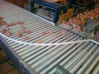 Транспортировка яйца: фото 1