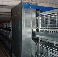 Клеточное оборудование для молодняка: фото 5
