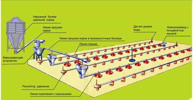 Схема напольного содержания птицы